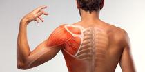 Advanced-Anatomy---Physiology-L3-1200x600.jpg