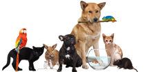 Animal-Care-L2-1200x600.jpg