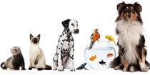 Animal-Care-L3-1200x600.jpg