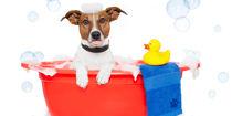 Dog-Grooming-L3-1200x600.jpg
