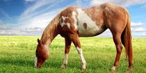 Equine-Studies-L2-1200x600.jpg